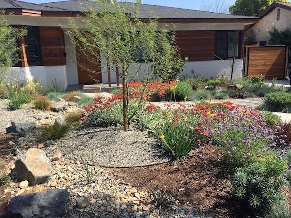 Desert Rock Garden Resized 2